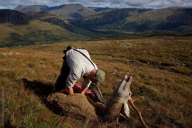 A stalker guts a red deer stag in front of a scottish landscape by Will Clarkson for Stocksy United