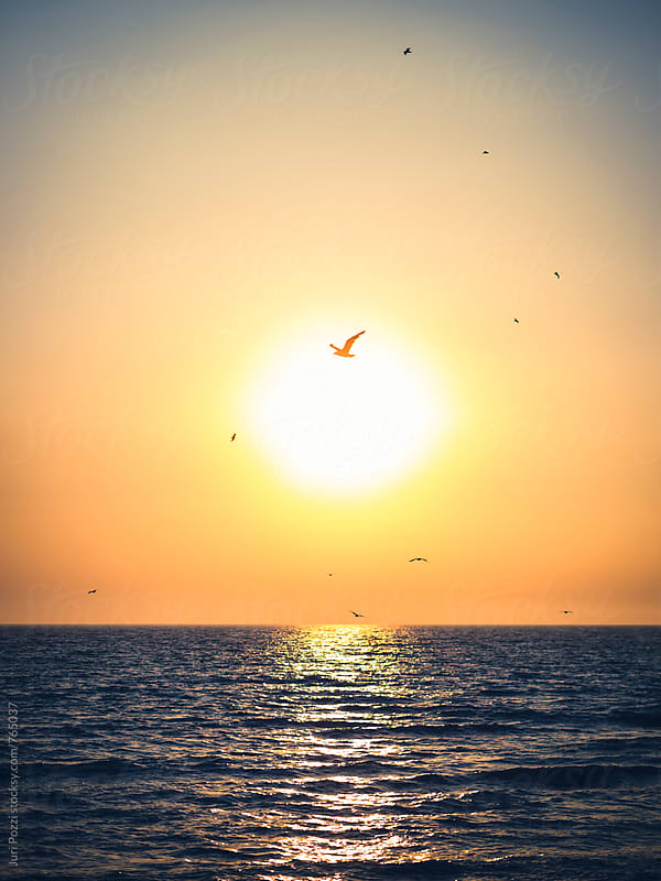 seagull flying in front of sun at sunset by Juri Pozzi for Stocksy United