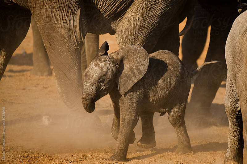Zambia - South Luangwa National Park by Mark Pollard for Stocksy United