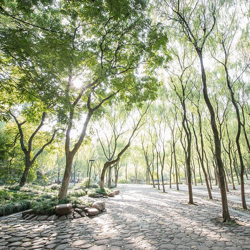 Lindgrün (Lime Green) - Hangzhou by Andy Brandl for Stocksy United