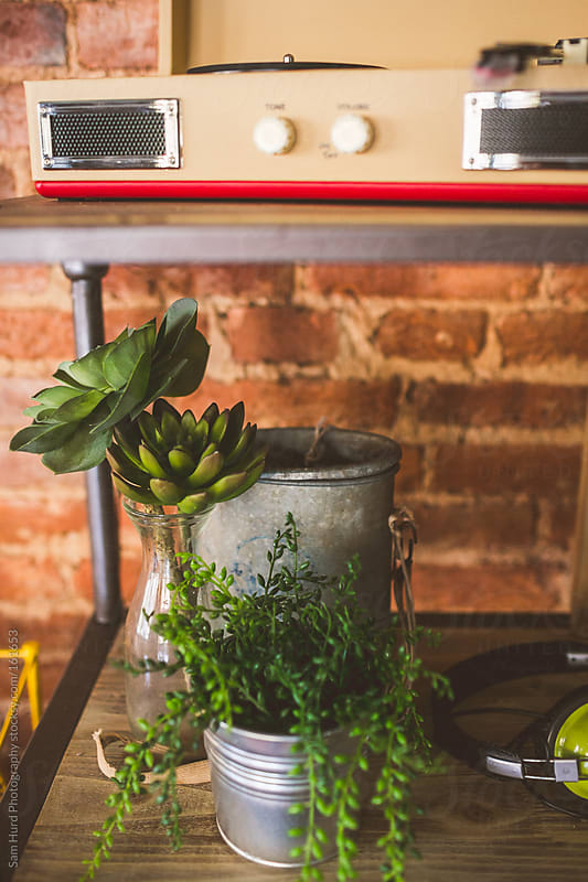 plants and knobs by Sam Hurd Photography for Stocksy United