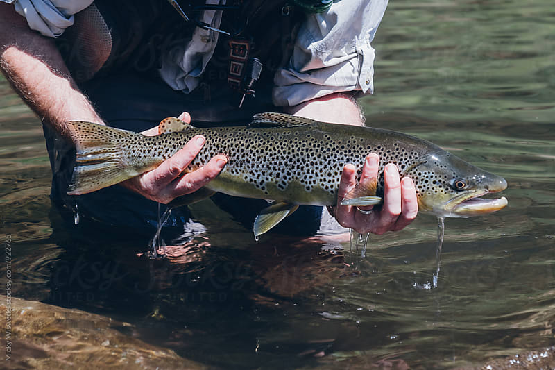 fly fisherman holding a brown trout caught in a mountain stream on fly by Micky Wiswedel for Stocksy United