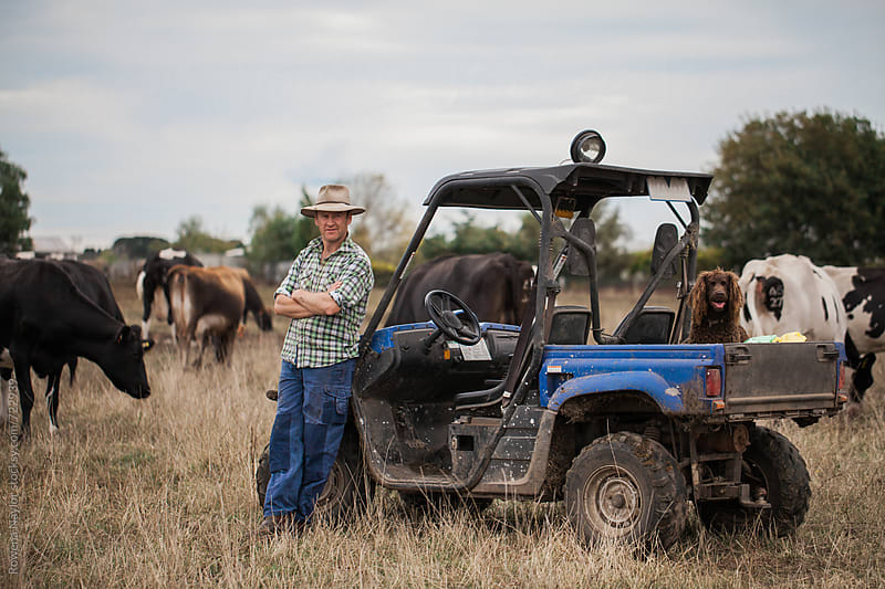 Dairy farmer with working dog and herd by Rowena Naylor for Stocksy United