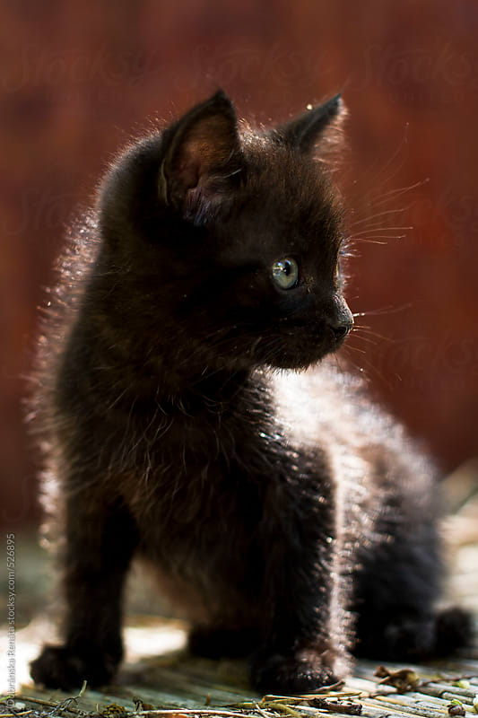 Black kitten by Dobránska Renáta for Stocksy United