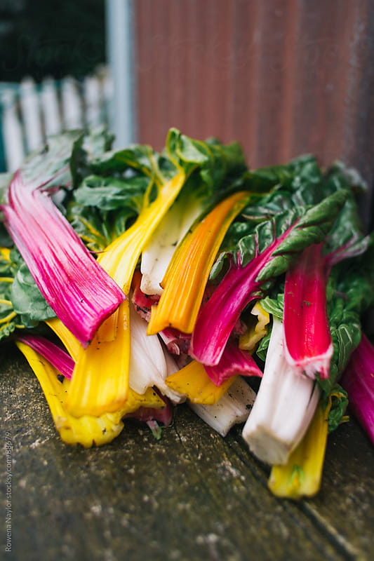 Freshly Harvested Rainbow Chard by Rowena Naylor for Stocksy United