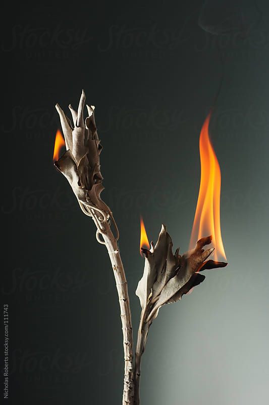 Burning Sage by Nicholas Roberts for Stocksy United