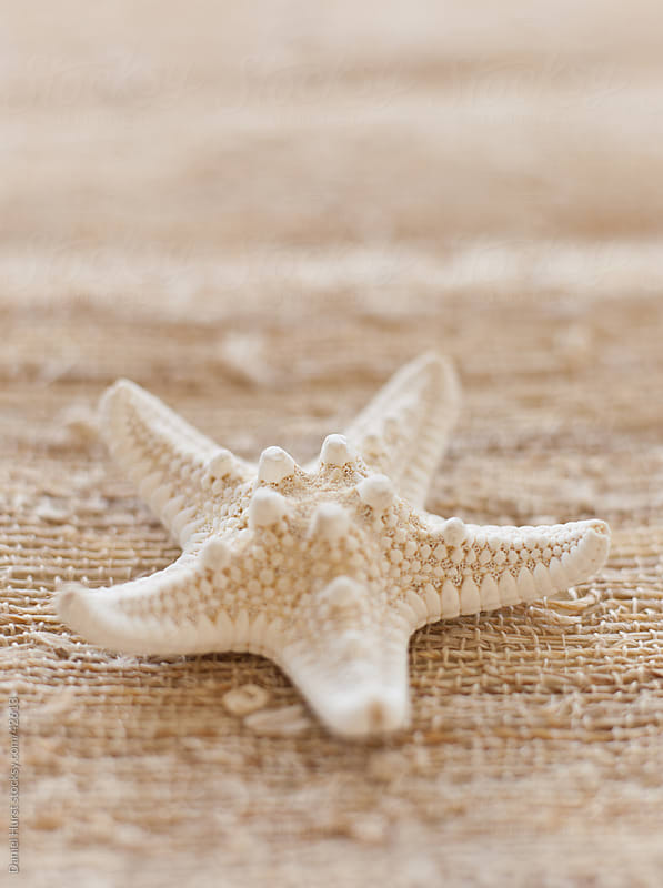 Starfish closeup by Daniel Hurst for Stocksy United