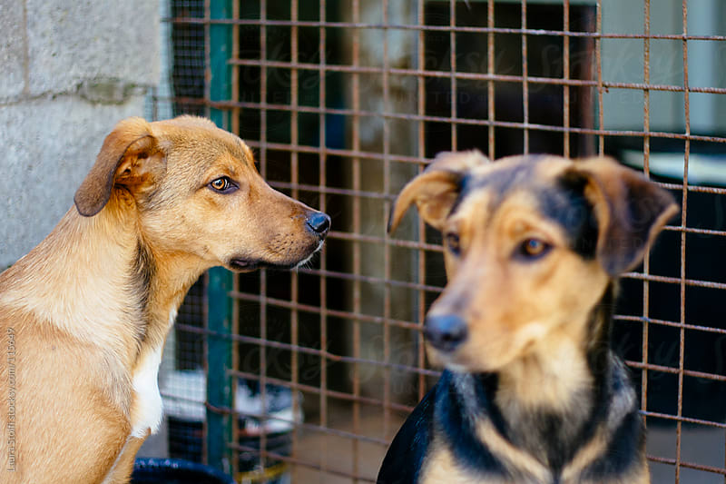 Portrait of two puppies in dog shelter with iron net on their background by Laura Stolfi for Stocksy United