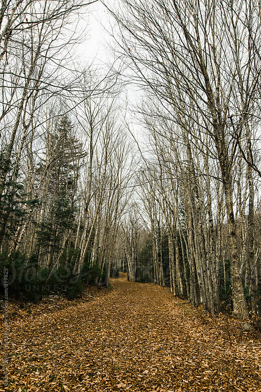 Autumn hiking trail by Isaiah & Taylor Photography for Stocksy United