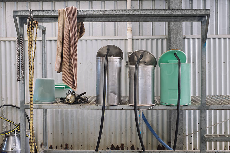 Colostrom buckets in dairy by Rowena Naylor for Stocksy United