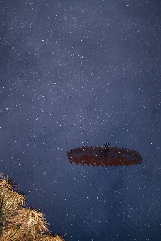 A paraglider reflected in the surface of a lake by Andy Campbell for Stocksy United