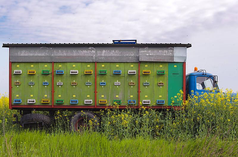 Honey bee truck by Jelena Jojic Tomic for Stocksy United