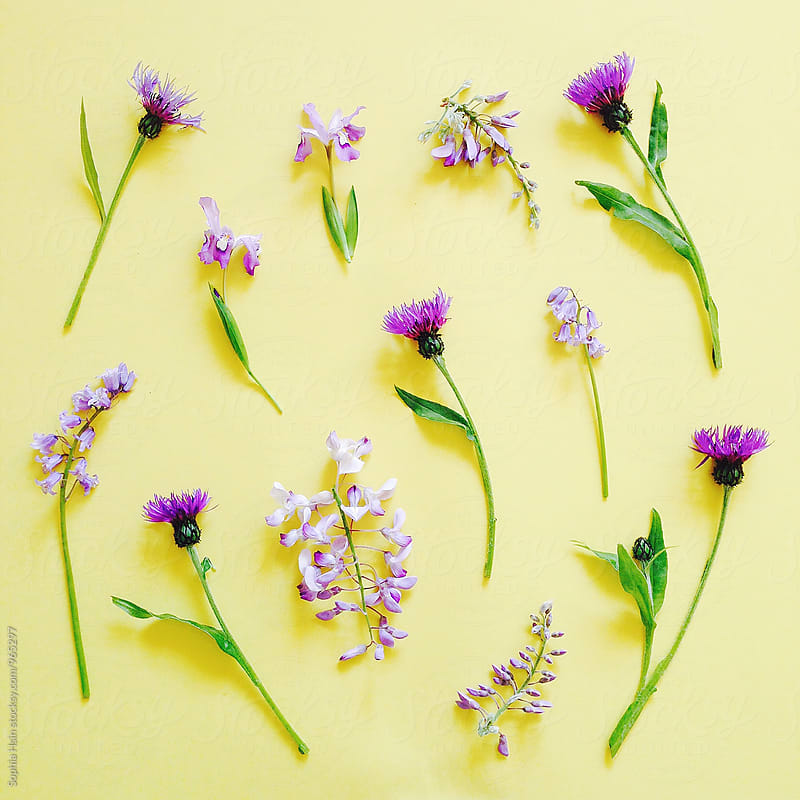 Purple flowers, neatly organized by Sophia Hsin for Stocksy United