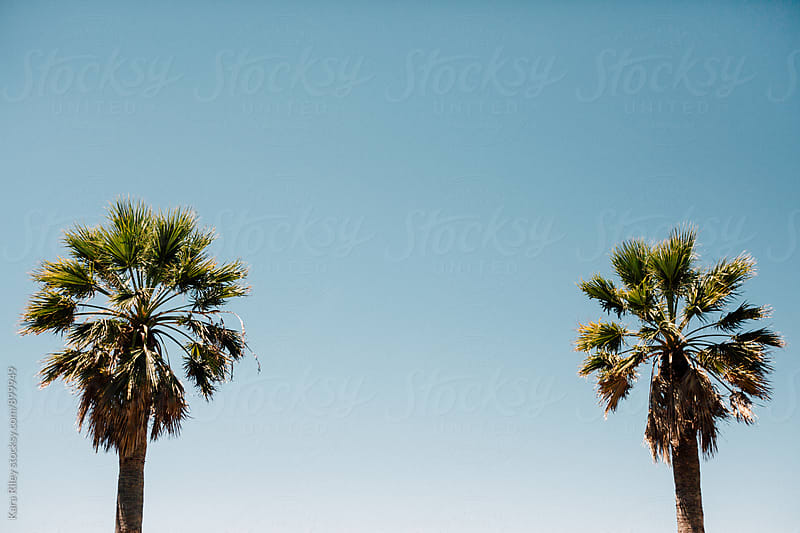 Row of Palm Trees by Kara Riley for Stocksy United