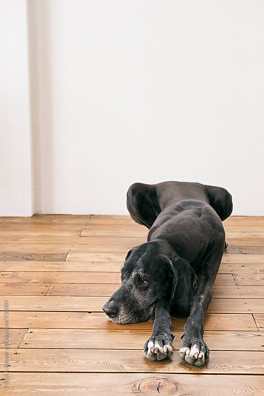 Sad black pet on floor at home by Danil Nevsky for Stocksy United
