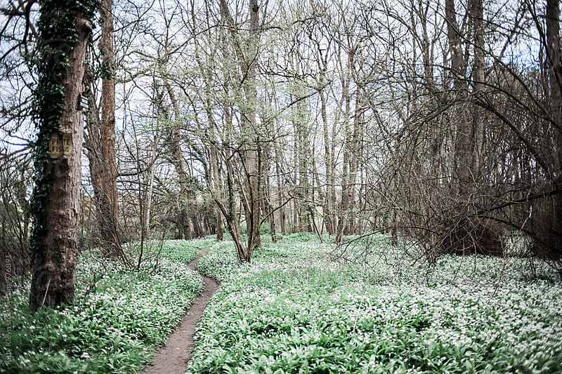 A wild garlic woodland by Kitty Gallannaugh for Stocksy United