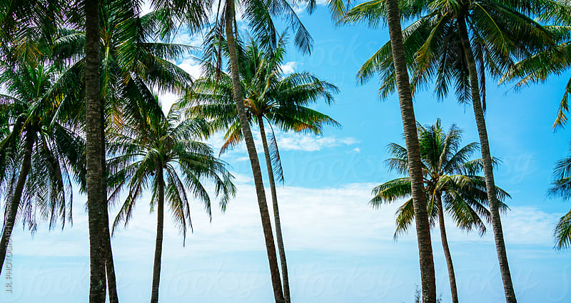 Palm trees at tropical beach by J.R. PHOTOGRAPHY for Stocksy United