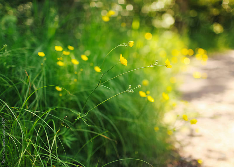 buttercups and grass by Kelly Knox for Stocksy United