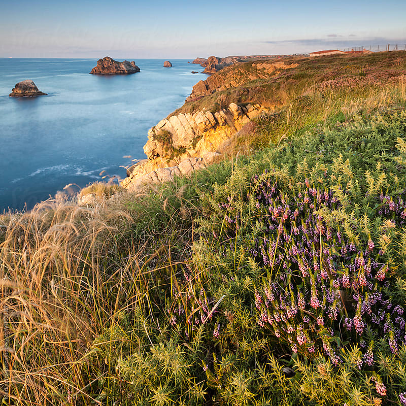 Wildflowers on a cliff at sunset by Marilar Irastorza for Stocksy United