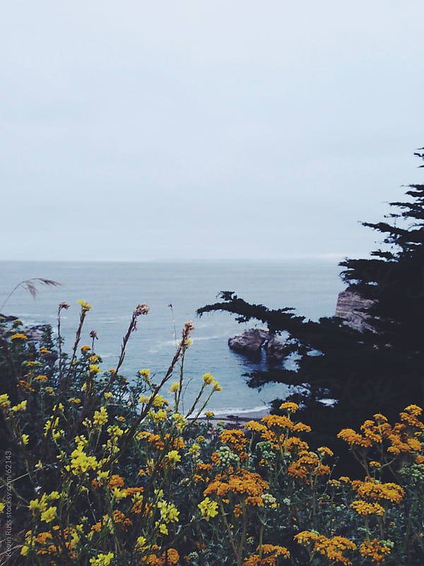Coast Wild Flowers at Dusk by Kevin Russ for Stocksy United