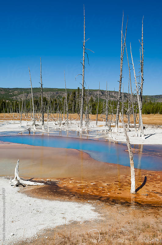 Opalescent Pool, Yellowstone by Mark Windom for Stocksy United
