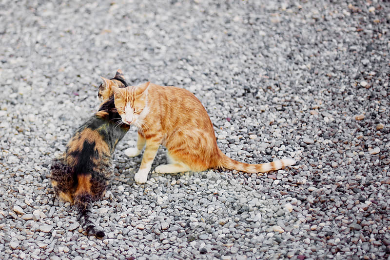 Two cats cuddle each other and sit on gravel by Laura Stolfi for Stocksy United