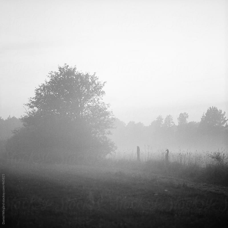A foggy field by Daniel Wirgård for Stocksy United
