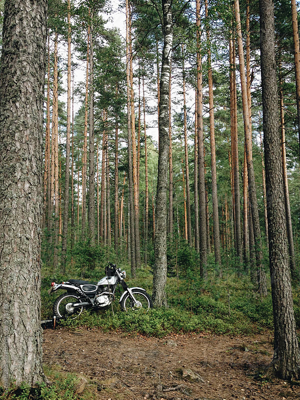 Motorcycle in the pine forest by Liubov Burakova for Stocksy United