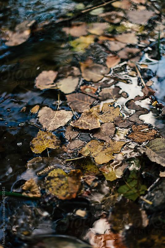 creek by Melanie DeFazio for Stocksy United