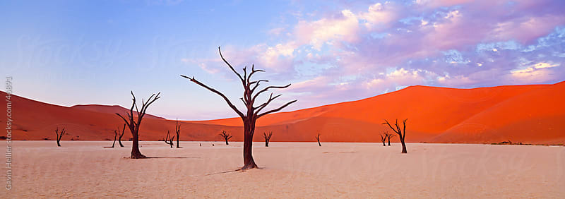 Dead trees and orange sand dunes, Dead Vlei,  Sossusvlei dune field, Namib-Naukluft Park, Namib Desert, Namibia, Africa by Gavin Hellier for Stocksy United