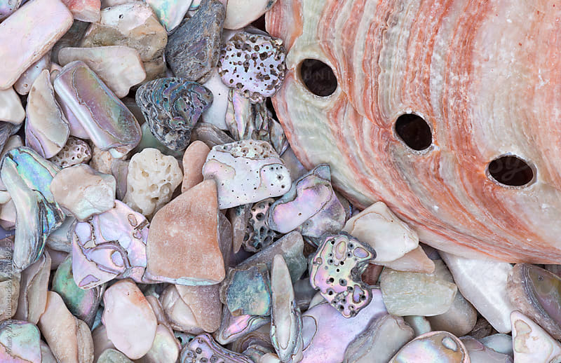 Abalone shell and pieces, closeup by Mark Windom for Stocksy United