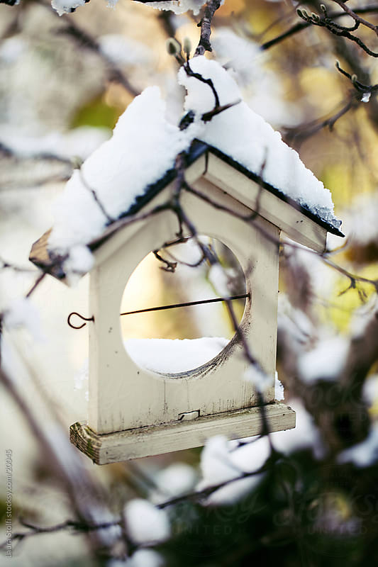 Covered in snow house shaped wooden birds feeder hanging from branch by Laura Stolfi for Stocksy United
