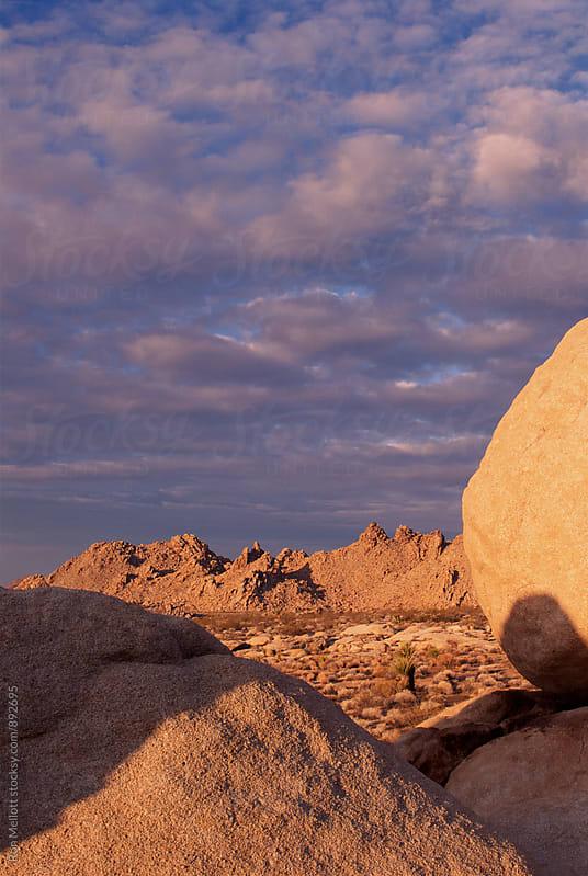 35-mm film capture of winter sunrise in Mojave Desert of California by Ron Mellott for Stocksy United