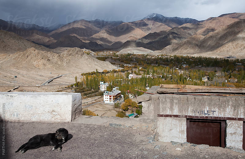 A dog relaxing with mountainview afar in Ladakh,India by PARTHA PAL for Stocksy United