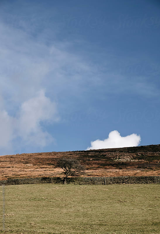 Tree on a hillside under a blue sky. Edale, Derbyshire, UK. by Liam Grant for Stocksy United