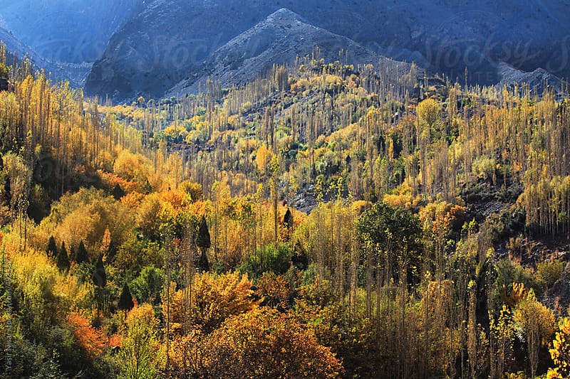 Autumnal View of Gupis Valley by Yasir Nisar for Stocksy United