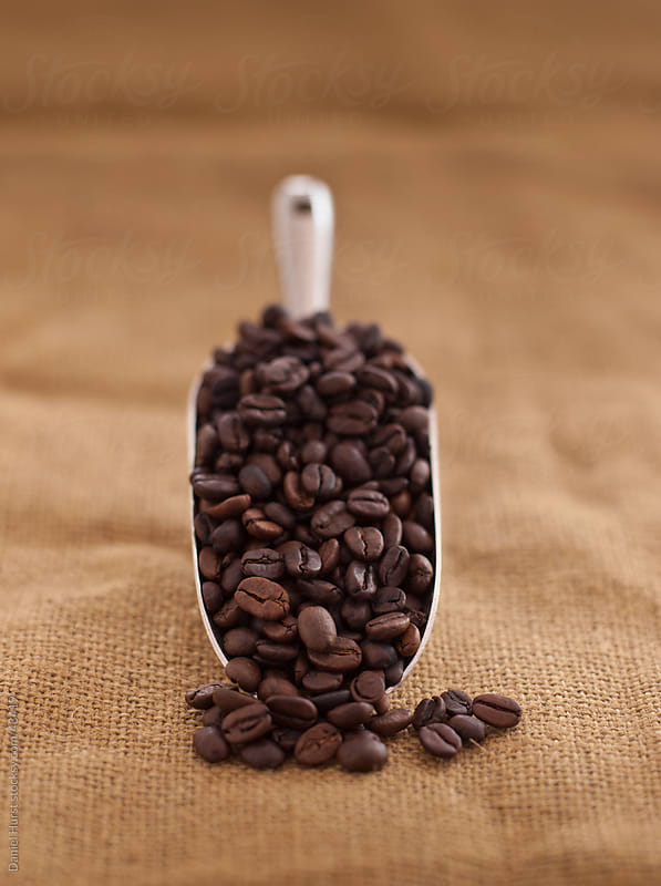 Scoop of coffee beans by Daniel Hurst for Stocksy United