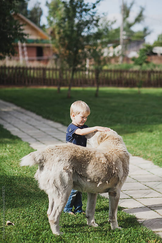 Little boy playing with a giant dog by Irina Efremova for Stocksy United