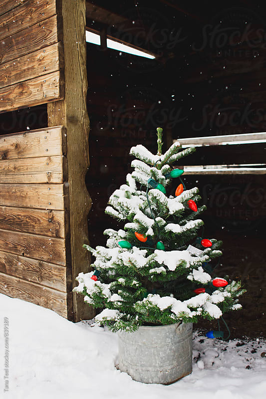 small Christmas tree with lights in barn doorway in snow by Tana Teel for Stocksy United