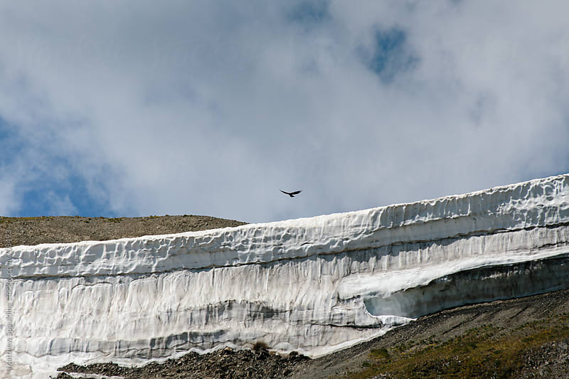 Falcon soaring above snowy ridge in mountains by Matthew Spaulding for Stocksy United