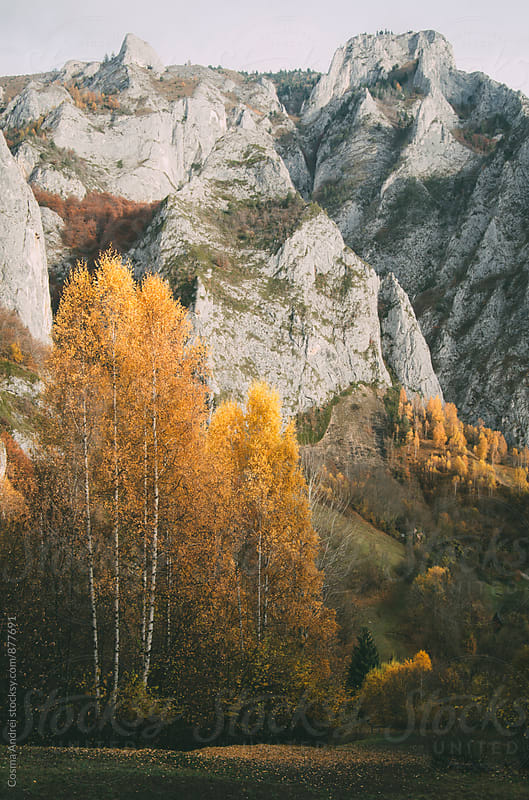 Mountain with yellow birch trees in autumn by Cosma Andrei for Stocksy United