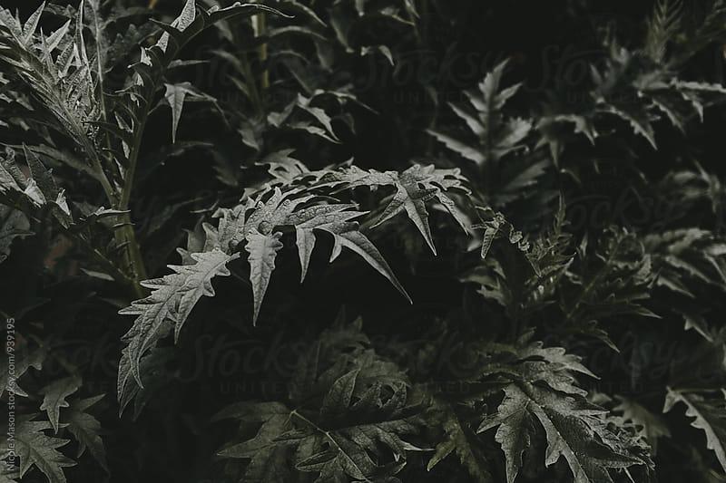 dark green leafy plant by Nicole Mason for Stocksy United
