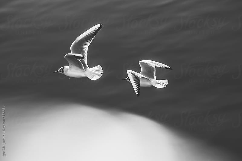 bird couple above water by Igor Madjinca for Stocksy United