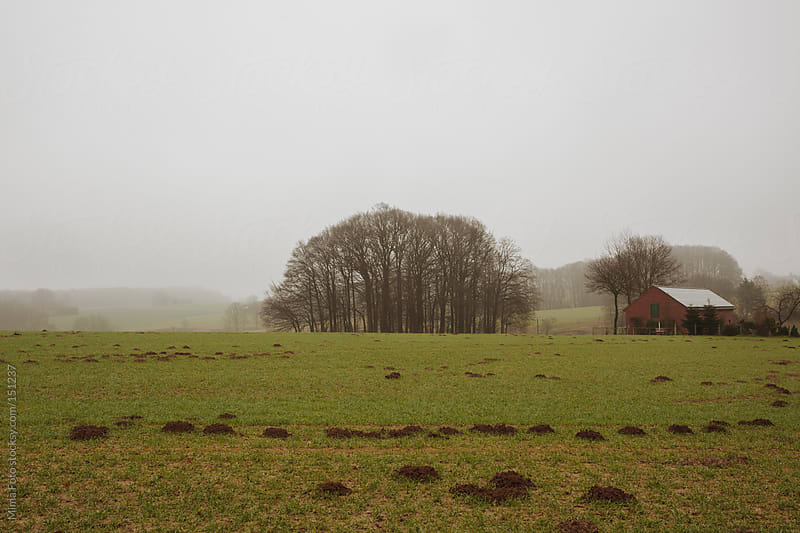 Winter fallow field in Teutoburger Wald area  by Mima Foto for Stocksy United