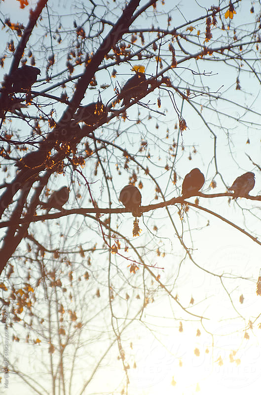 Birds on branches with sunlight from the back by Marija Anicic for Stocksy United