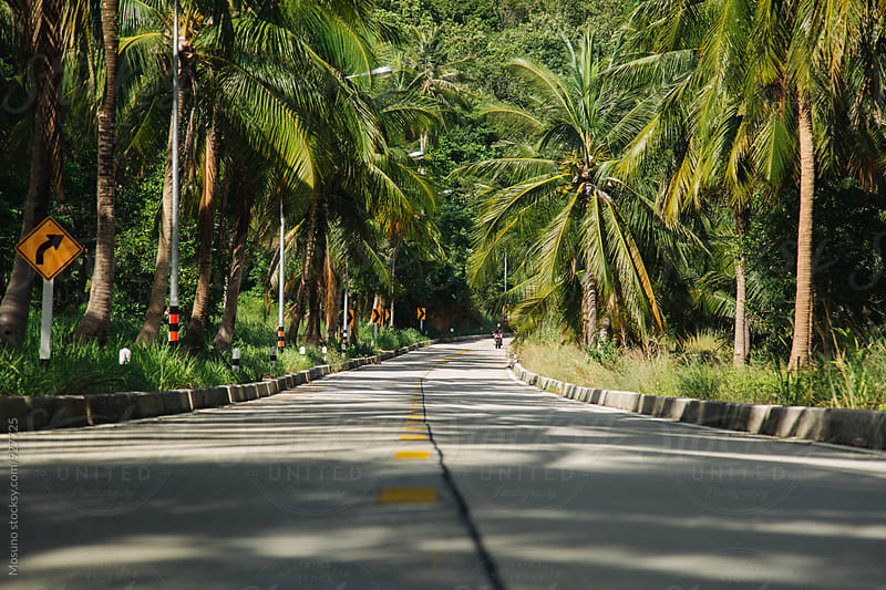 Palm Trees and Road on a Tropical Island by Mosuno for Stocksy United