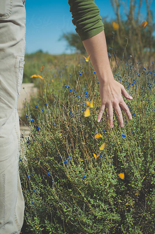 Woman's Hand Fluttering Butterflies by Tamara Pruessner for Stocksy United