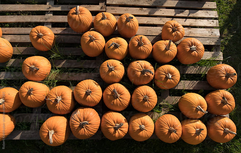 Big pile of orange halloween pumpkins by Robert Kohlhuber for Stocksy United