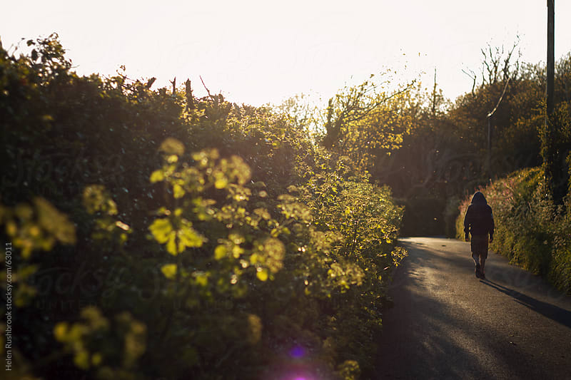 A country lane in golden light by Helen Rushbrook for Stocksy United