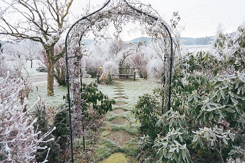 Winter garden by Robert Kohlhuber for Stocksy United